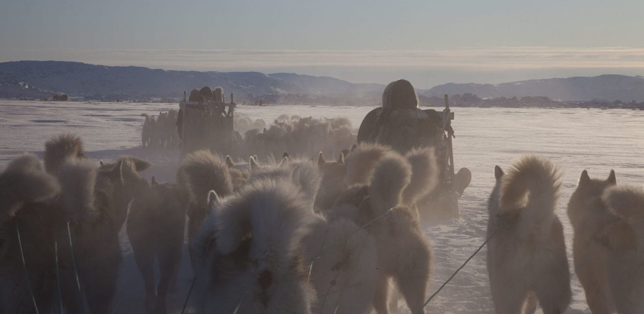Dogsled near Ilulissat in Greenland