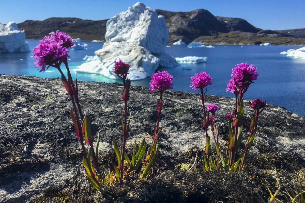 Crediting is required when using photos from our galleries. This means you have to credit both the photographer and Visit Greenland (http://vg.gl/accr)  Photo by Bo Normander - Visit Greenland  This photo is licensed under Visit Greenland License Agreement. Please refer to the license agreement for more info about the rights of use associated with the image.  Download the agreement here: http://vg.gl/vglicense  When downloading or sharing this image you enter into an agreement with Visit Greenland A/S about the use of the image under this license. If you want to apply for extended user rights for downloads on this database please read these guidelines: http://vg.gl/guidel