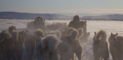 Dogsledge near Ilulissat - David Trood